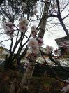Kimg9339_1